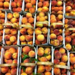 Peach Harvest at the Peach Tree Farm in Boonville Missouri