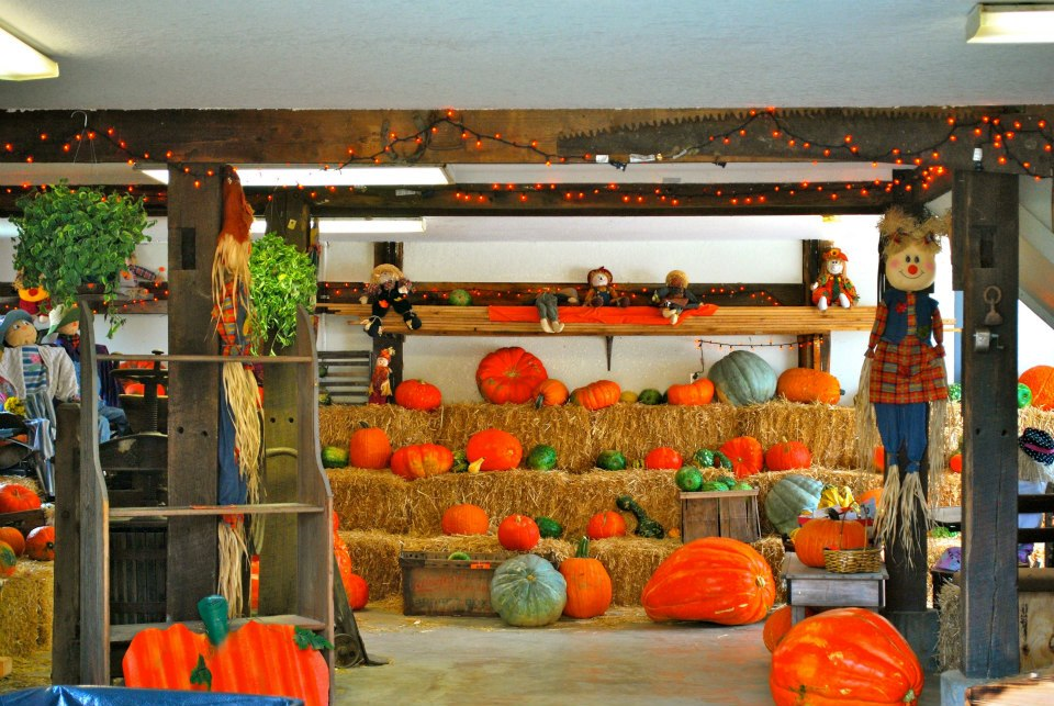 Pumkins from the Patch in Boonville Missouri near Columbia at The Peach Tree Farm