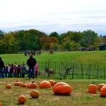 Pumkins in Boonville Missouri near Columbia at The Peach Tree Farm