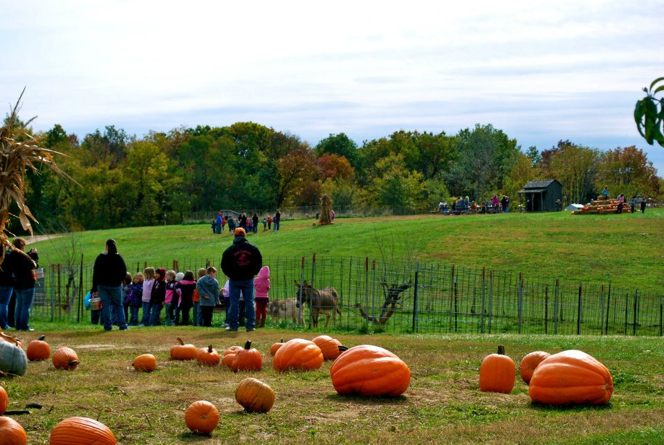 Pumkins in Boonville Missouri near Columbia at The Peach Tree Farm