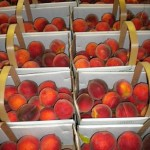 The Three Phases of Peaches, Phase Three, The Picking Phase at The Peach Tree Farm Boonville Missouri