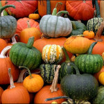Tons of Different Pumpkins at The Peach Tree Farm near Columbia Missouri
